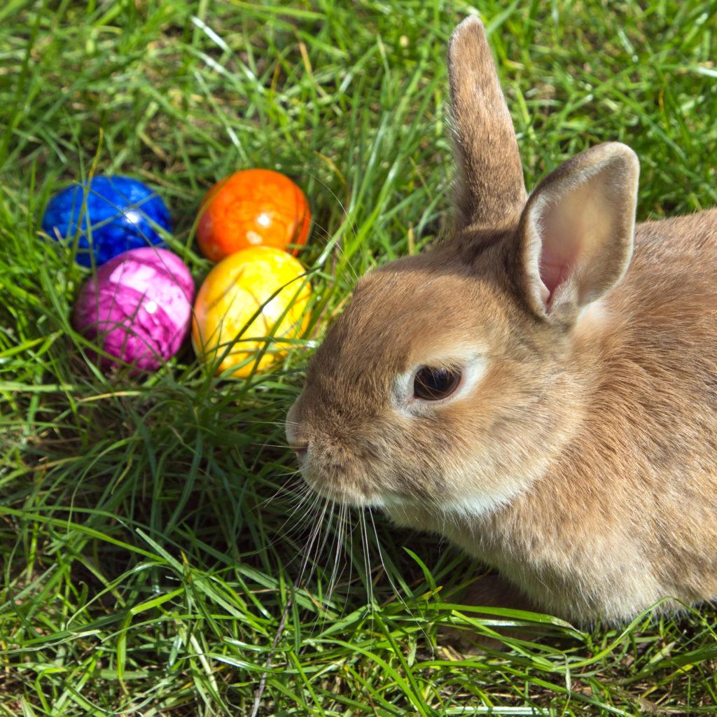부활절 토끼 그리고 계란